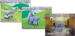 養牛カメラ録画イメージ