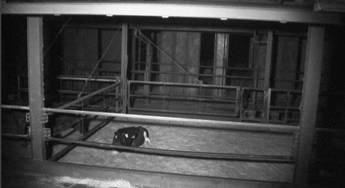 養牛カメラドームプロ夜間画像