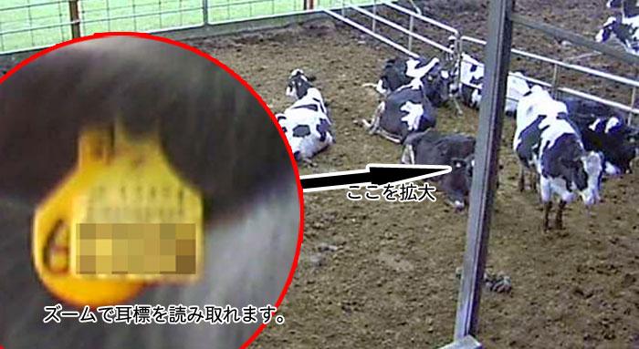 養牛カメラドーム拡大